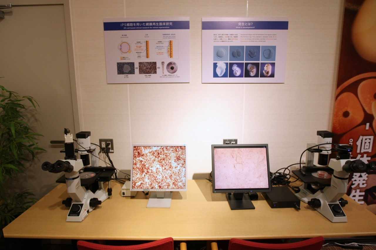 Display of iPS cells