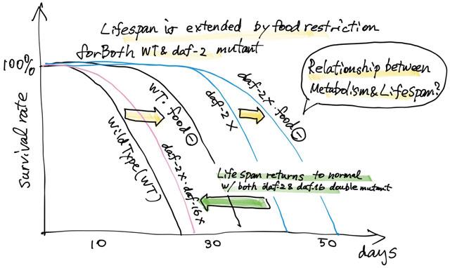 lifespan extension