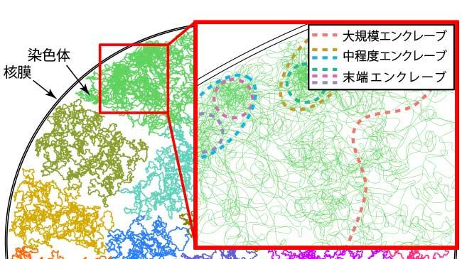 細胞の中にある複雑なゲノムDNAの構造様式の特徴
