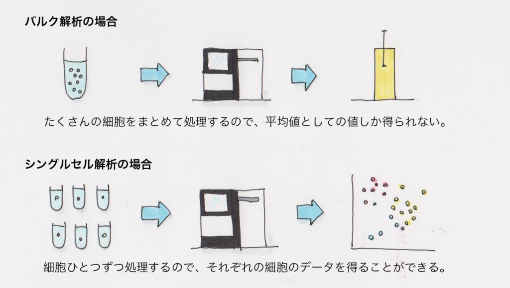 バルク解析とシングルセル解析の違い