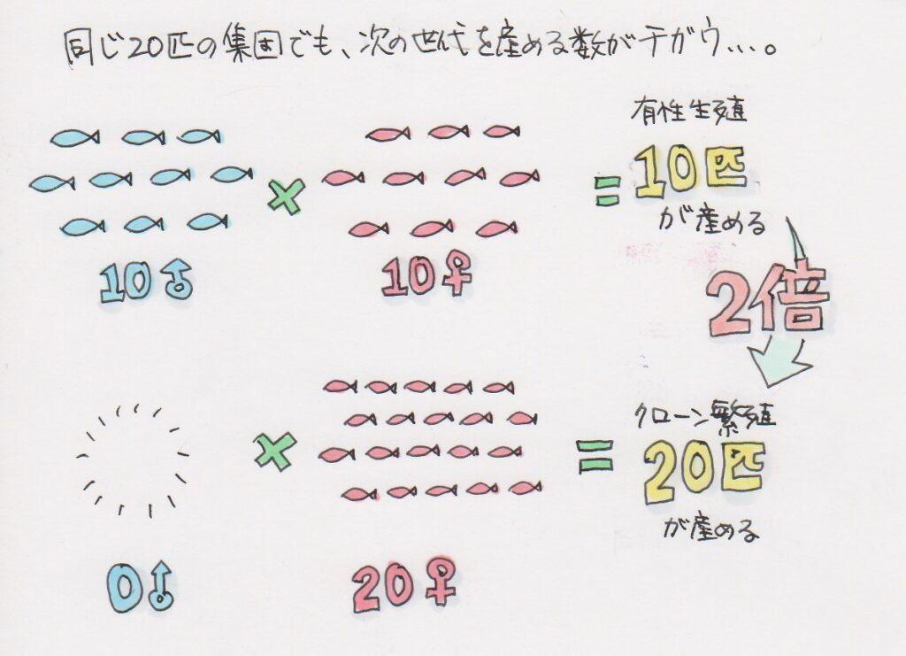 クローン繁殖の子供の数は有性生殖の2倍になるということの説明図