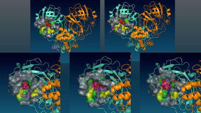 コロナウイルス・メインプロテアーゼの分子動力学シミュレーション